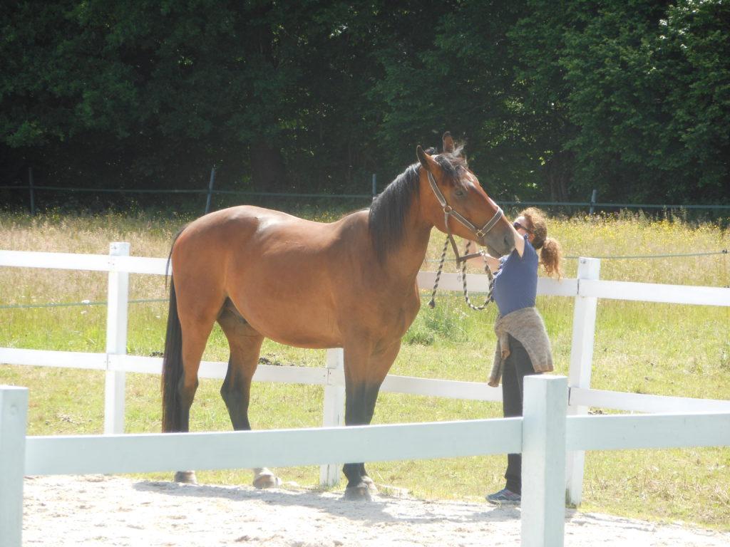 cheval carolyn 001